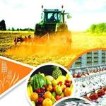 فعالیت های صنعتی و کشاورزی